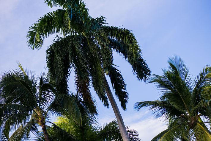 sidesmile-style-discover-palm-beaches_-27